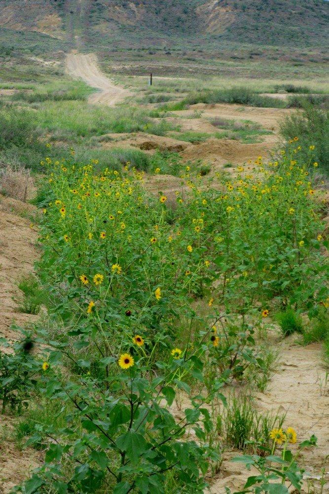 [ditchflowers.jpg]