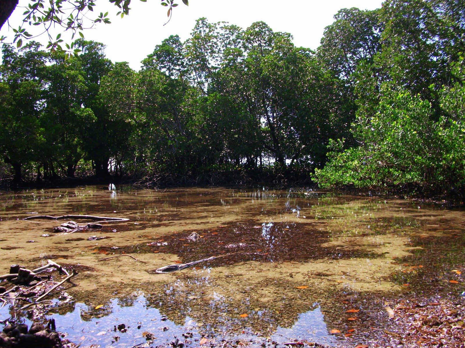 marine mammal primate and coastal habitat conservation in kenya the mangroves. Black Bedroom Furniture Sets. Home Design Ideas