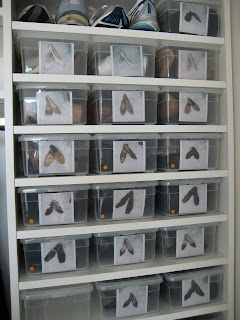 plastic shoe boxes labeled with pictures of the shoes