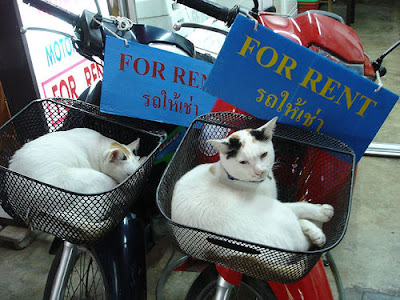 cats in bike baskets with for rent sign
