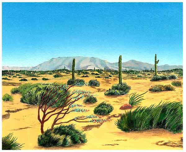animales y plantas del desierto - group picture, image by ...