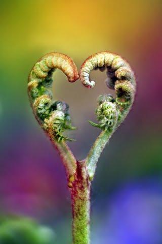 http://1.bp.blogspot.com/_tg42ArcfTzU/TLMYcg6Fb3I/AAAAAAAABw8/qz_wnPXylJI/s1600/heart+stem.jpg