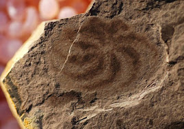 Спагетоподобно животно е съществувало преди динозаврите (Spaghetti-like animal preceded dinosaurs)