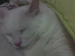 Eu dormindo