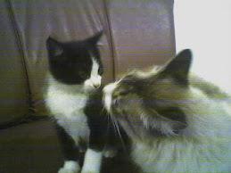 Boo Boo e Isaac
