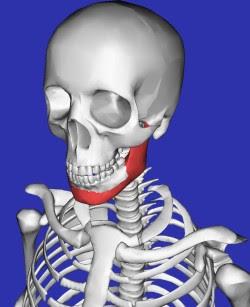 Esqueleto 3D