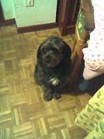 cruce_perro