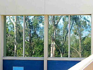 trees reflected in Cal Arts windows