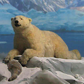 Polar Bear diorama at Natural History Museum of Los Angeles County