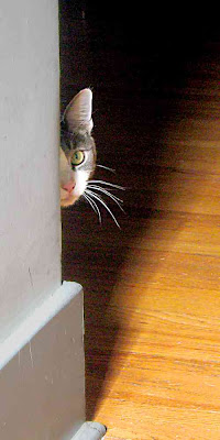 Crackle the cat peeks out from behind a wall (c) David Ocker
