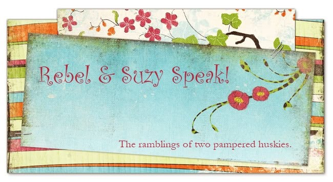Rebel & Suzy Speak!