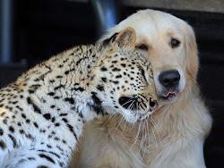 Amigos de Verdade