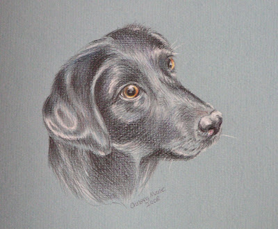 pet portrait of labrador by Chrissy Marie