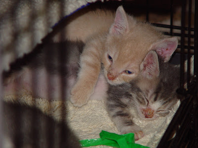 how to get a stray kitten to use the litter box 2