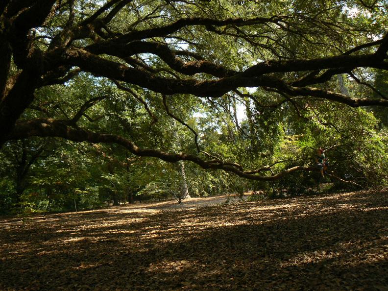 A Journey To The Door Hopeland Gardens Aiken S C