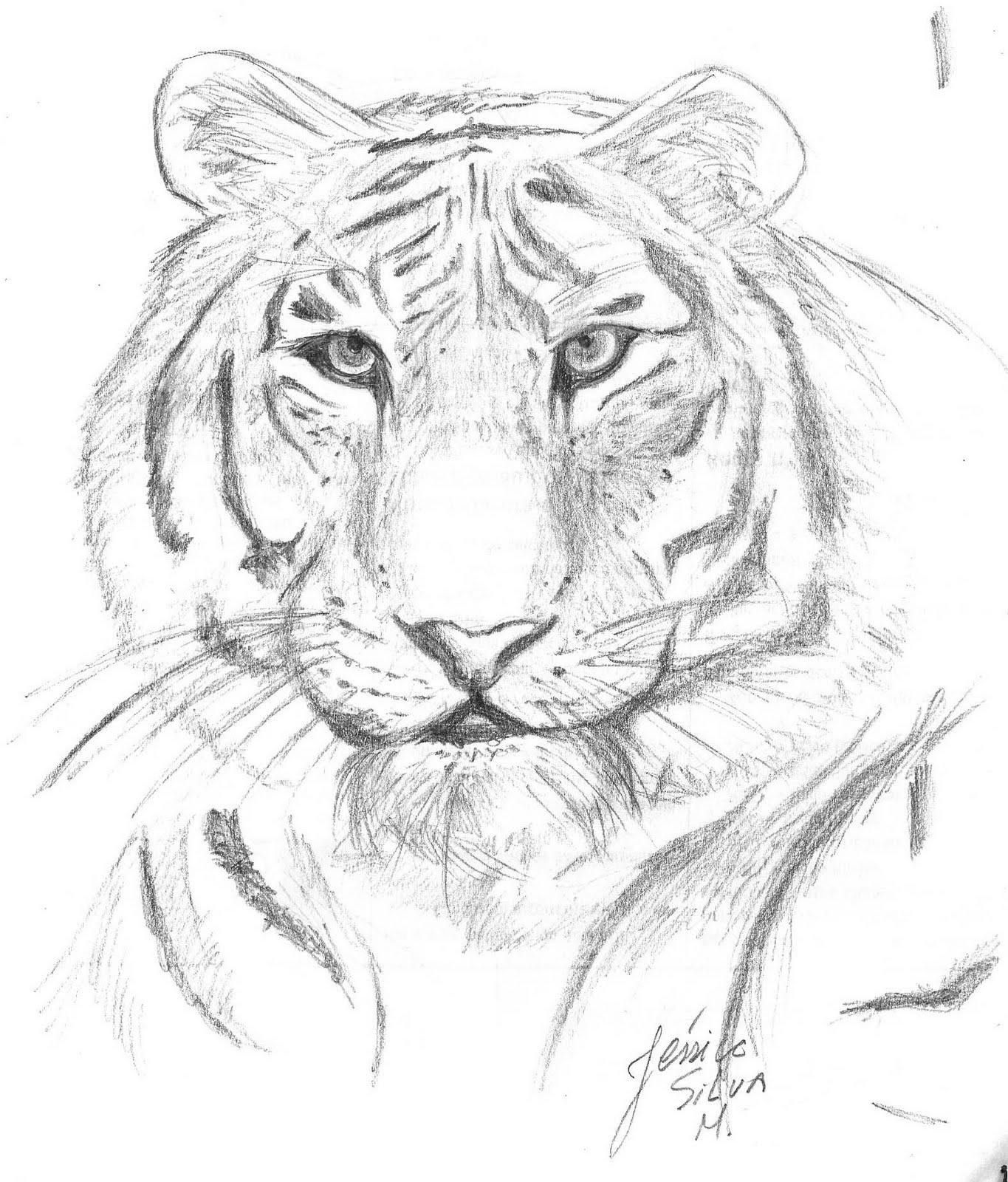 Desenhos da Guin Tigre+preto+e+branco