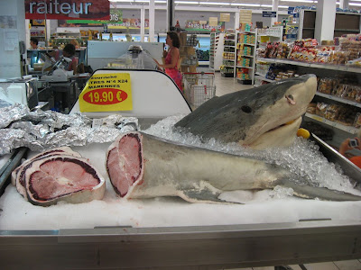 Shark at US Imports, Sandy Ground St. Martin