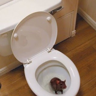 Water intasato cosa fare, water otturato, sturare cesso, rimedi wc ostruito, risolvere tazza del bagno intasata
