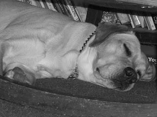 Black/white picture of Toby's head/paw (taken from his level), he is sleeping under the rocking chair