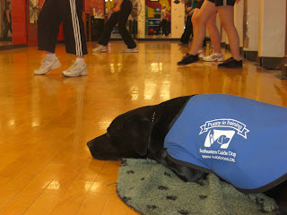 Photo of Duchess laying down in the YMCA class.  She is wearing her coat, and sleeping on a paw-print blanket