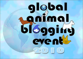 Photo of GABE'S badge - it says Global Animal Blogging Event - and has many animals on it