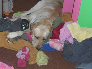 Picture of Toby sleeping on a pile of clothes/blankets