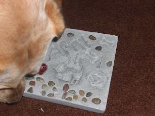 Picture of Toby's head beside the paw print stone, after it was taken out of the mold