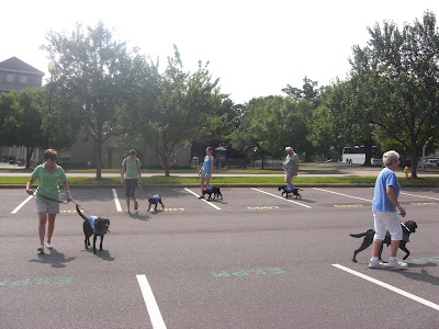 Photo of some of the dogs in our group doing obedience