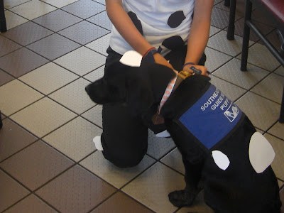 Photo of Rudy's side - besides the blue guide dog coat, he's got on some white spots, and is also wearing a cow bell