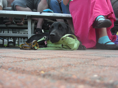 Picture of Rudy in a down-stay watching the parade - he's using my purse as a pillow