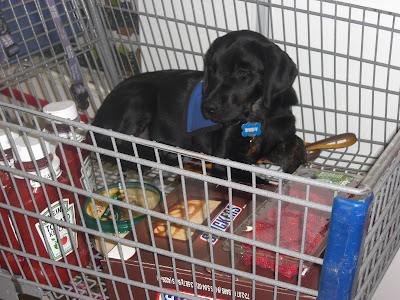 Picture of Rudy when we first got him.  He's in coat riding in a buggy inside Wal-Mart