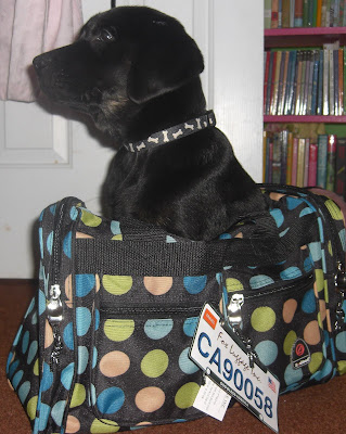 Picture of Rudy back in May 2010, sitting in the cute polka dot duffle bag I bought him from CSN stores