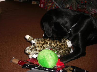 Picture of Rudy enjoying the items that were in his stocking - including many stuffies AND treats!!