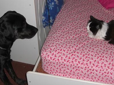 Picture of Rudy staring at Ms. Molly - who is laying on my bed