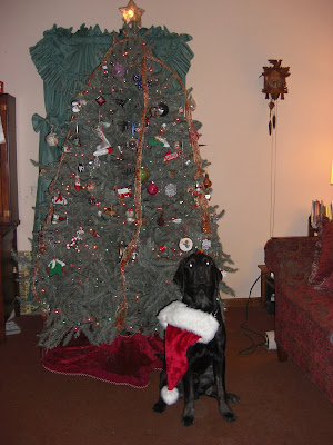 Picture of Rudy in a sit-stay wearing a Santa Hat in front of the Christmas tree