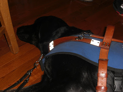 Picture of Rudy in a down stay (in coat/harness) sleeping - during the meeting