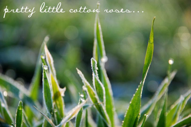 Pretty Little Cotton Roses
