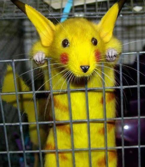 animal tratado genéticamente