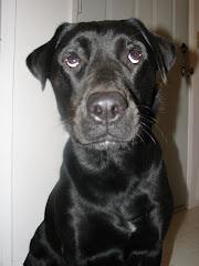 Jessi the Wonderdog!