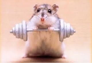 Se Puede Bañar A Un Hamster | Ardilla O Hamster Ruso Salud Y Enfermedades