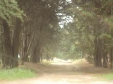 Bosques Oníricos