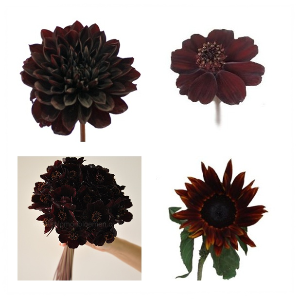Dahlia Burgundy Black Flower: Blog: Chocolate + Cupid = Love