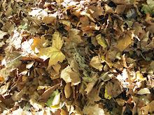 Outono - folhas