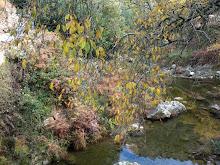 Outono amarelo sobre um carreiro de água