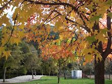 Outono no seu melhor...