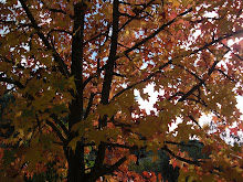 Outono - o esplendor das cores