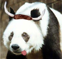 El viejo y entrañable Pandahorny: putero, drogata y apóstata. Ese careto destrozado por el vicio lo dice todo...