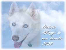 Run Free Sweet Dakota