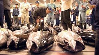 Tsukiji, mercado de pescado en Tokio