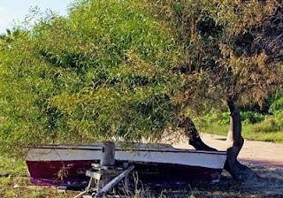 El declive de la pesca mediterránea
